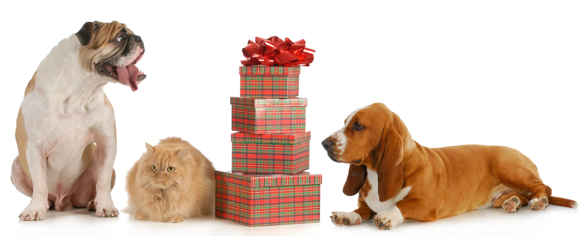 Two dogs and a cat pose with wrapped holiday presents. The best tech pet gifts are those that cater to your pet's needs as well as your own.